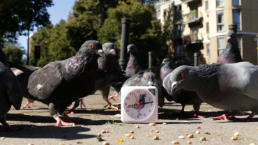 pigeons and clock